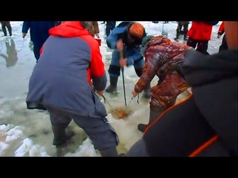 ЭТА РЫБА СОБРАЛА ВОКРУГ СЕБЯ ВСЕХ РЫБАКОВ на льду ПЕРВЫЙ ЛЁД 2017 2018 рыбалка видео ловли со льда видео