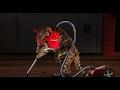 Legra�n� video Ko�ka ukl�ze�ka