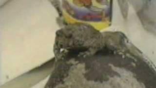 Video Appocaliptische frog