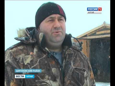 Алтайские фермеры нашли способ бороться с низкими закупочными ценами на молоко - DomaVideo.Ru