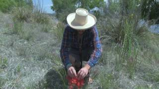 In this video Jeff discusses an edible plant called Indian Paintbrush and shows how to harvest it. If you enjoyed this video, give it a thumbs up, share it on social media and subscribe to Primitive Lifeways on YouTube. Find my website here: http://www.primitivelifeways.com/