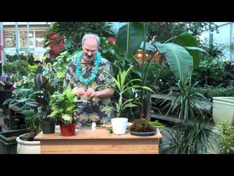 GardenWorks - Air Layering