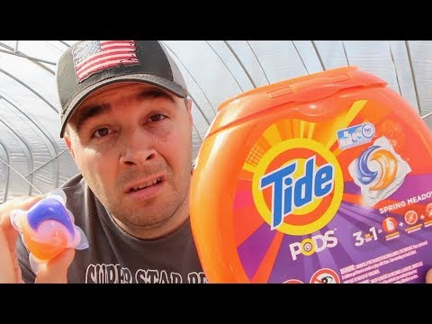 **The Tide Pod Challenge!** What is Wrong with People?