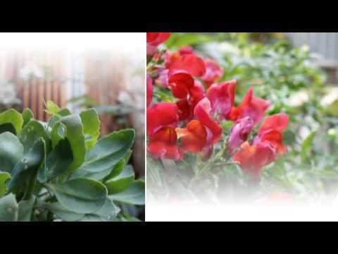 x Pict Story HD - SONY製 BDレコーダーの昨日のx-Pict Storyで動画を作ってみました。 写真はNEX-7で撮影したものです。
