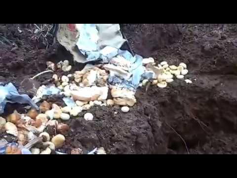 Desperdício de lanche em Pinhão
