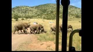 Pilanesberg South Africa  city pictures gallery : Pilanesberg National Park, South Africa
