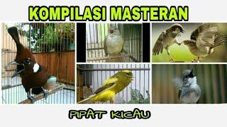 Kompilasi Masteran Burung Berkicau Suara Cililin,  Kapas Tembak,  Gereja Tarung,  Kenari & Ciblek