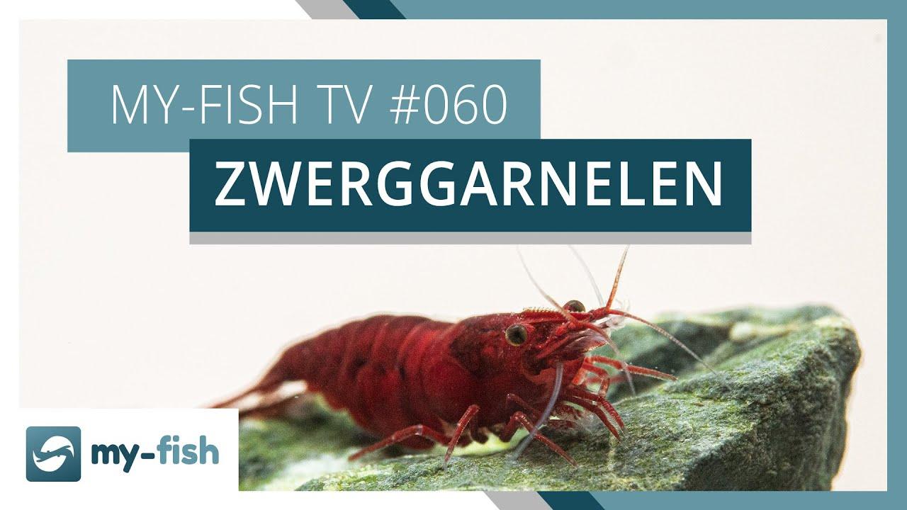 my-fish TV - Deine Nr. 1 Anlaufstelle für alle Themen rund um die Aquaristik 4