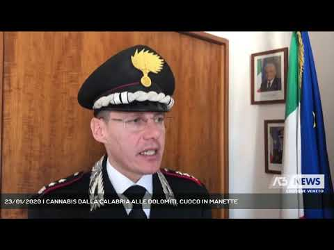 23/01/2020   CANNABIS DALLA CALABRIA ALLE DOLOMITI, CUOCO IN MANETTE