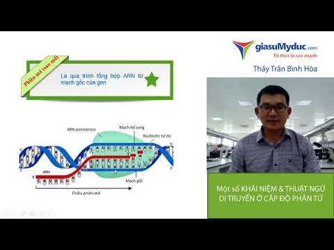 Ôn thi ĐH môn Sinh học: Một số khái niệm và thuật ngữ di truyền ở cấp độ phân tử