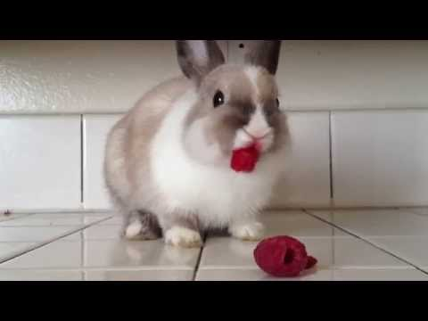Bunny Snacks on Raspberries