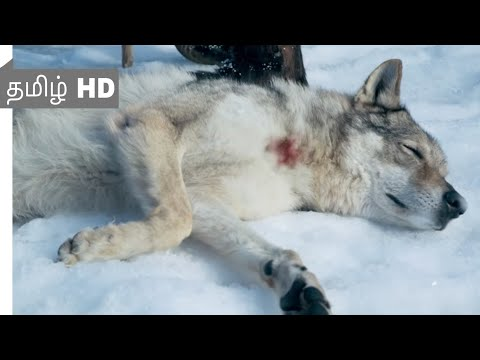 Alpha (2018) - Man's best Friend Scene Tamil 9 | Movieclips Tamil