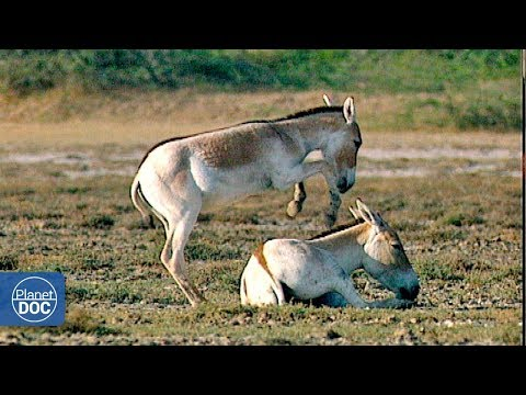Little Rann Desert (India) - Full Documentary