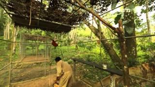 Video NET17 - Pulau Seram, Surga Burung Endemik di Maluku MP3, 3GP, MP4, WEBM, AVI, FLV September 2018