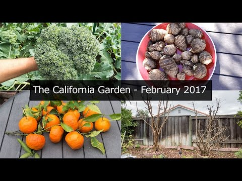 The California Garden - Feb 2017 - Irvine, Zone 10