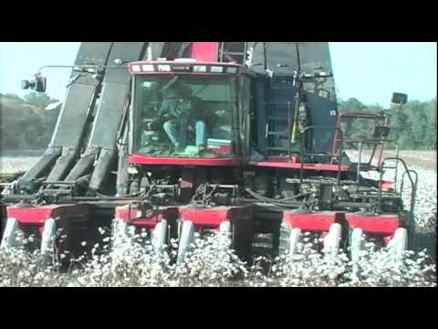 cotton - A look at the history, production and uses of cotton.