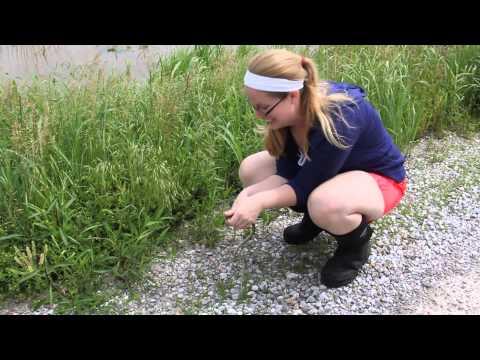 Jenna catching a ribbon snake