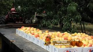 Wedge Oak Farm included in WCTE TV Documentary