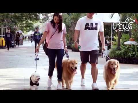 Gading Walk is Now Dog Friendly Area