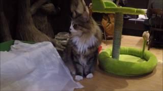 Cat Lover's Paradise - Lady Dinah's Cat Emporium