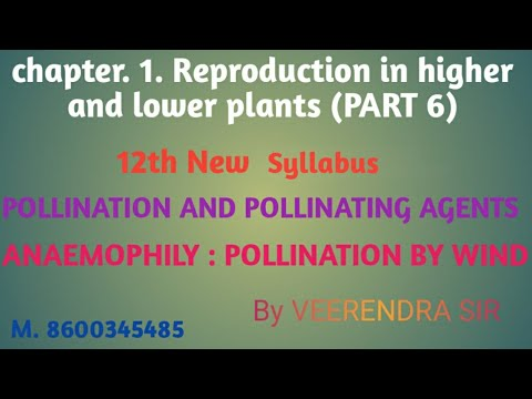 Chapter.1.  Topic 1.6. POLLINATION AND POLLINATION WITH THE HELP OF WIND