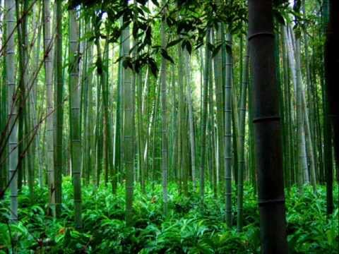 flute - Trail of the Angels - Bamboo flute chinese music.