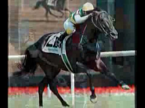 Horse Racing-The Best Sport Ever!