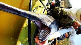 Video Kayak Fishing: HUGE Prehistoric Paddlefish MP3, 3GP, MP4, WEBM, AVI, FLV Oktober 2018