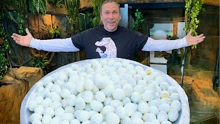 MOST SNAKE EGGS IN A DAY THIS YEAR!! | BRIAN BARCZYK by Brian Barczyk