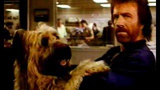 Nonton Top Dog   Trailer  1995  Film Subtitle Indonesia Streaming Movie Download