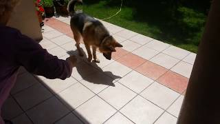Funny Dog Tries To Stomp Out His Shadow