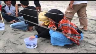Pelepasan Penyu di Aceh Jaya