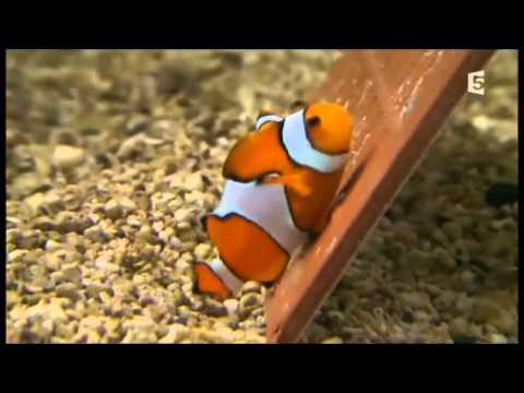Comment colorier un poisson la r ponse est sur for Poisson clown prix