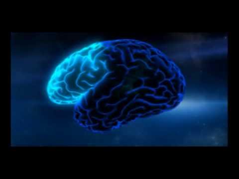 Eine neues Gehirn-Tagesprogramm