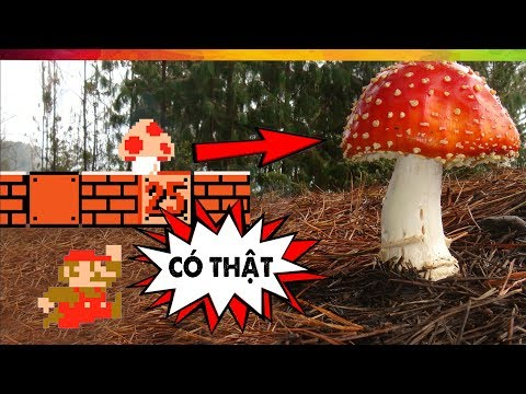 #114 Sự Thật Nổ Não SS02E20: Siêu Nấm Mario