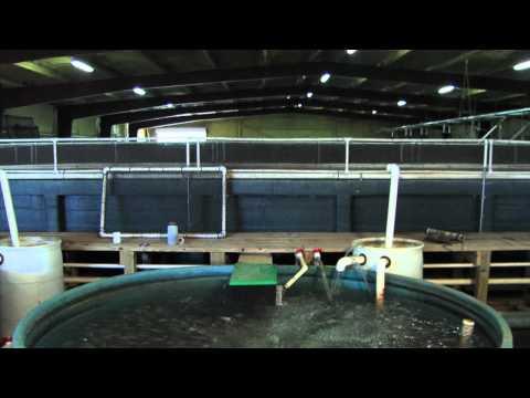 1 – Indoor Fish Production.mov