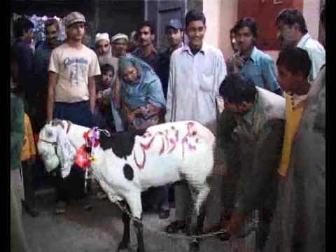 Begum Nawazish Goat City42