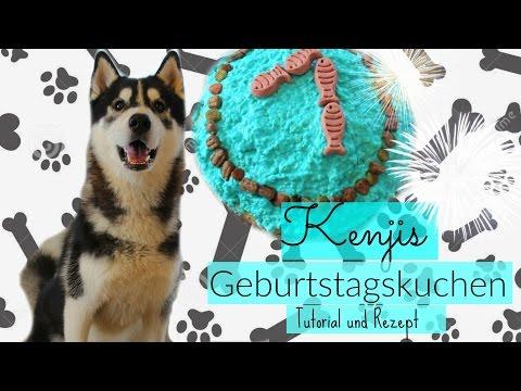 HUNDEKUCHEN  Thunfisch - Rezept I Husky Kenjis erster Geburtstagskuchen I KENJI ☆ I ellylicious♡