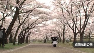 とふっちと行く「いわての桜」~盛岡市~