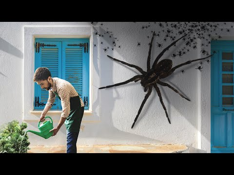 What If Giant Spiders Occupied Your City One Day