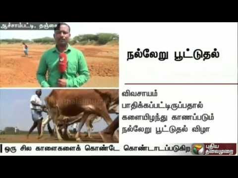 Report-on-the-traditional-நல்லேறு-பூட்டுதல்-ritual