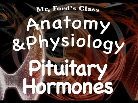 lutenizing hormone - Our fourth video from the endocrine system lesson. We begin our look at the individual hormones in the endocrine system. All of our videos can be found at ht...