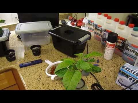 How to Build a DWC Hydroponic System ($15)