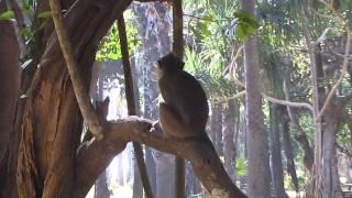 Thailand Aap In Natuurpark Koh Lanta