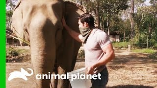 Elephant With Possible Tuberculosis Needs Her Trunk Checked | Evan Goes Wild: Passion and Purpose by Animal Planet