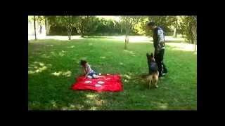 Profesyonel Köpek Eğitimi -- Club K-9 dan Profesyonel Çözümler 1 -- videosunun kapak resmi