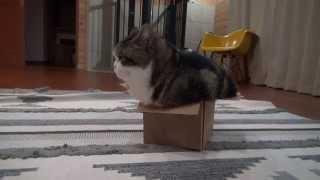 いろいろな入り方をするねこ。 -Maru gets into the same box with various styles.-