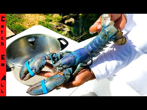 WHY Does BLUE LOBSTER Tastes BETTER? **1 In 2 MILLION Rare COOKING**