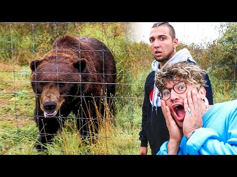 FACE TO FACE WITH GRIZZLY BEARS!