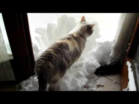 gatto spala neve